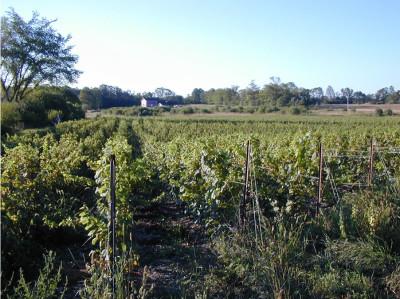 prince edward county organic winery