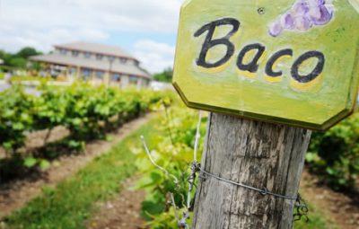 Sandbanks Estate Winery